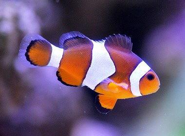 熱帯魚・魚類