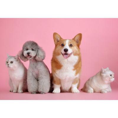 ペット禁止物件で飼育がバレたらどうなる?
